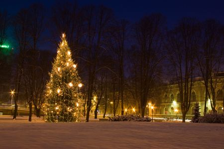 Christmas tree in Riga, Latvia photo