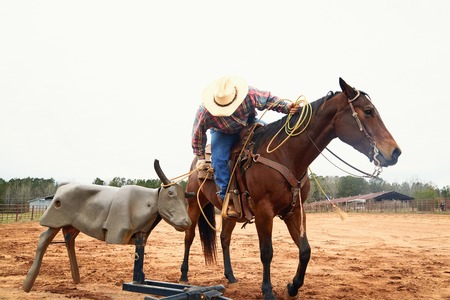 Cowboy in hat, blue jeand and checkered shirt riding horse, throwing lasso and training on bull simulator in ranch. Red clay background. Countryside