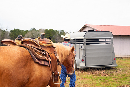 Man cowboy leading his horses from field to horsetrailer. Rural, countryside Stock Photo
