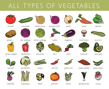 野菜分離セット。キャベツ、コールラビ、芽キャベツ、ブロッコリー、ピーマン、玉ねぎ、アスパラガス。ベクトルでカラーの図を描画します。