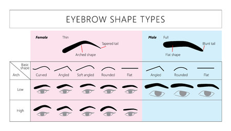 Male and female eyebrows. Vector. Basic eyebrow shape types. Fashion brows.