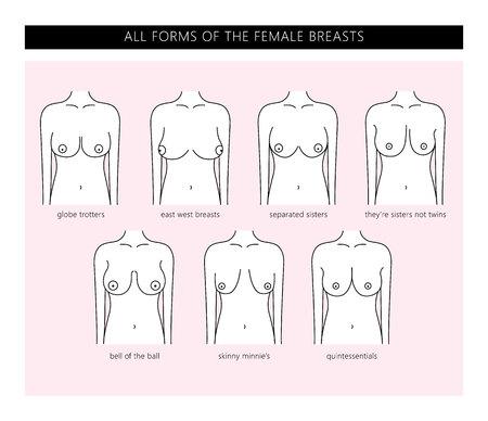 女性の胸の種類。女性の胸のすべての形態。女性の胸の形。ベクトル。