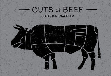 Cut of beef. Meat cuts - Cow. Poster Butcher diagram and scheme: brisket, shank, rib, plate, flank, sirloin, shortloin, rump, round, shank in vintage style drawing. Vector illustration - Vector.