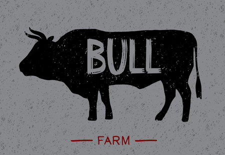 Poster about beef. The series about the farm with lettering: bull. Vintage handmade style. Vector illustration - Vector. Иллюстрация