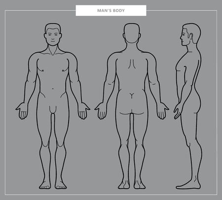 Vector llustration of mens body and male anatomy. Front, back and side view. Outline Vector Illustration - Vector 일러스트