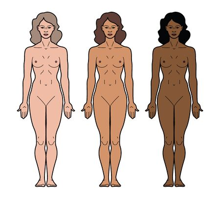 Illustration of woman's body and female anatomy. Front view. 3 types of skin tone. Fair-skinned and dark-skinned. Outline Vector Illustration - Vector 向量圖像