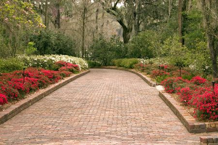 wide garden path bordered by azaleas