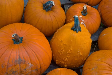 shady: group of shady pumpkins Stock Photo