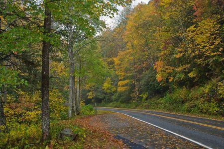 fall mountain foliage along the road after a rain photo