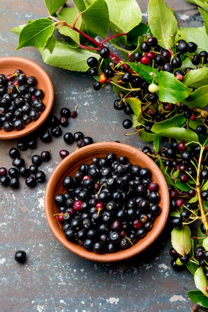 Superfood MAQUI BERRY. Superfoods antioxidant of indian mapuche, Chile. Bowl of fresh maqui berry and maqui berry tree branch on metal background, top view. Standard-Bild