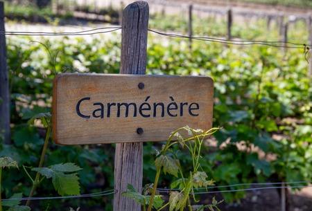 CARMENERE Wine sign on vineyard. Vineyard landcape
