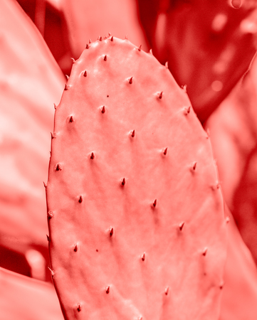 LIVING CORAL 2019. background with cactus. Living coral. Color of the year 2019.