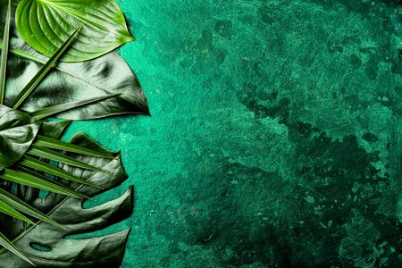 Creative tropical leaves background. Trendy tropical leaves on green slate background Top view, copy space.