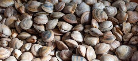 Background with fresh raw clams vognole. Food background.