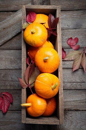 Autumn pumpkins with red leaves on a wooden background. Autumn halloween concept. Copy space. Stock fotó