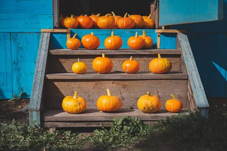 Autumn harvest halloween concept. Fall pumpkins on the stairs.
