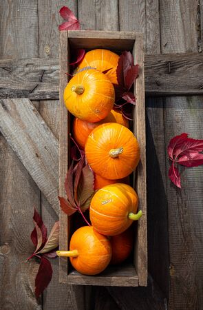 Autumn pumpkins with red leaves on a wooden background. Autumn halloween concept. Copy space
