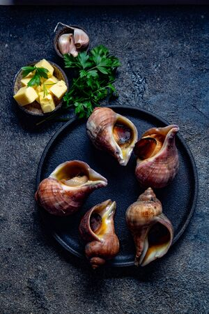 Raw ingredients giant ESCARGOT from Pacific ocean. Chilean big snails, butter, garlic and parsley Stok Fotoğraf