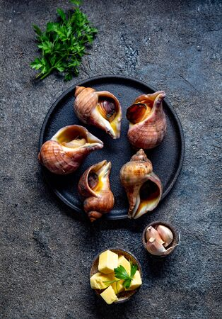 Raw ingredients giant ESCARGOT from Pacific ocean. Chilean big snails, butter, garlic and parsley 스톡 콘텐츠