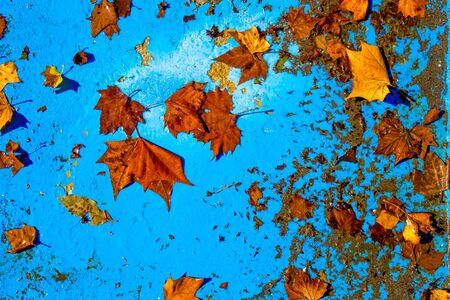 Fall red leaves on blue background. Top view.