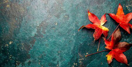Caen hojas rojas sobre fondo azul. Vista superior. Foto de archivo