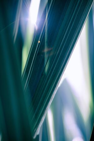 Tropical leaves background. Palm tree leaves, monstera. Green background.