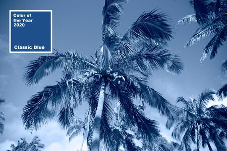 Tropical blue classic background. Palm tree on Easter Island. Color of the year. Coy2020.