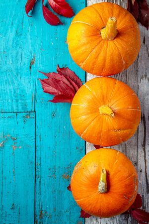 Autumn composition. Pumpkins on white blue background. Top view.