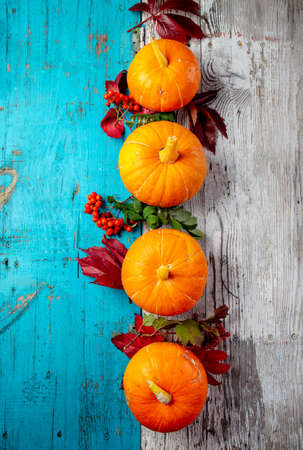 Autumn composition. Pumpkins on white blue background. Top view Imagens