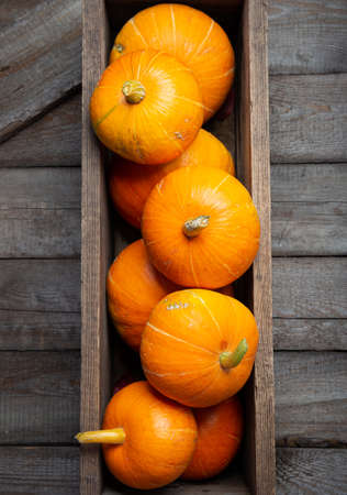 Fall composition with autumn pumpkins, copy space Imagens