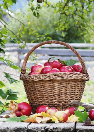 autumn is the time of apples photo