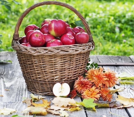 autumn comes with healthy apples photo