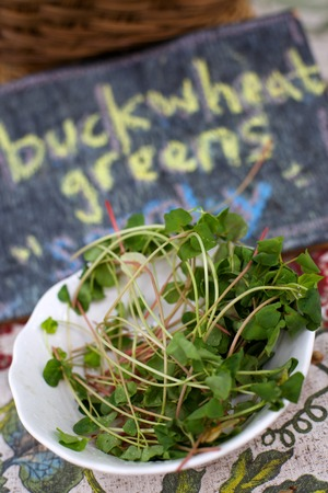 Buckwheat Greens in White Bowl with Chalk Sign
