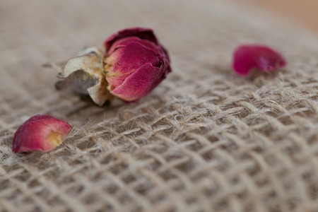 sackcloth: Single Dried Red Rose with Petals Side of Rose