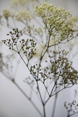 babys: Babys Breath Artistic Yellow and Grey