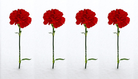 four red carnations  in the snow Standard-Bild