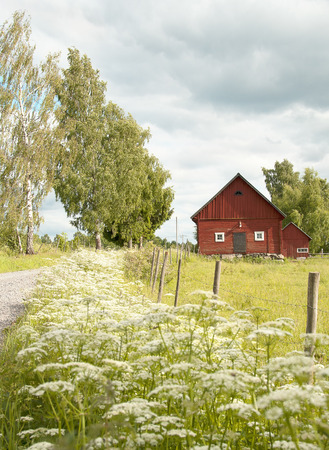 sommery scenery with barn in the south of Sweden