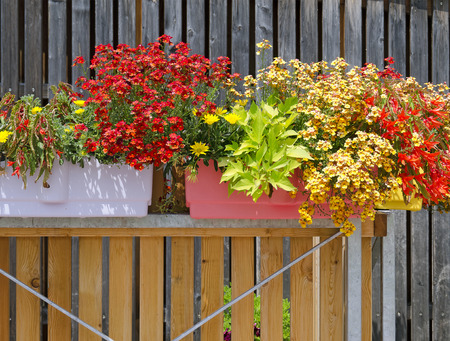 prosper: plant boxes with blooming plants at a balcony