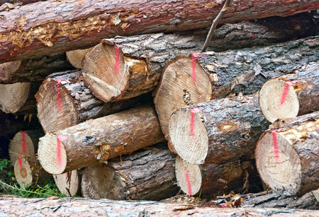 boles: a stack of red marked fresh fellt logs