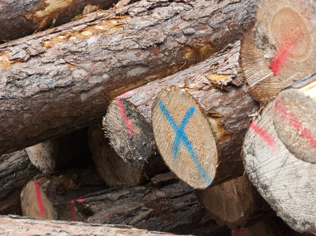 boles: a stack of red and blue marked fresh fellt logs