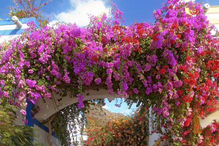 grand canary: alley with red and purple bougainvillea, harbour of Mogan, Grand Canary, Canary islands, Spain