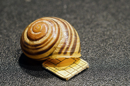 smart card: chip from a smart card and an empty snail shell on black leather