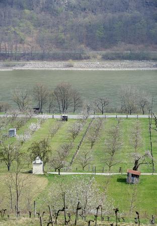 arbres fruitier: vall�e du Danube au printemps avec la floraison des arbres fruitiers Banque d'images