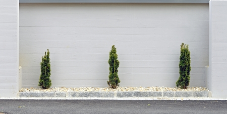 exposed concrete: Three Little Biotas in front of a gray painted exposed concrete wall