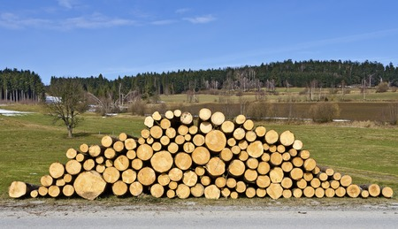 boles: pile of fresh cutted logs at a landscape in spring