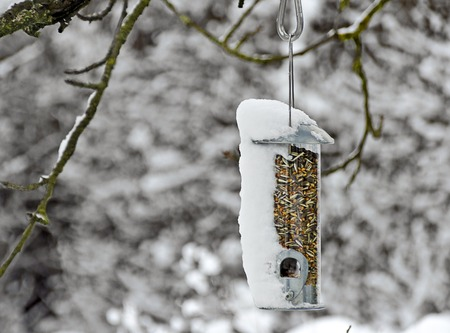 semen: transparent feed dispenser for birds with grains hanging on a tree partly snow-covered Stock Photo