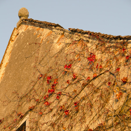 pediment: Gable of an old palace with red ivy in the light of the evening sun, Muehlbach, Lower Austria, Austria