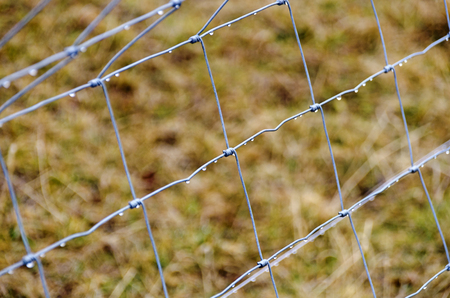 wattled: wattled wire frame fence with water drops