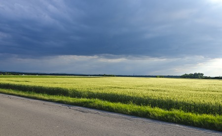 wheater: thunder clouds at the sky above wheat field in spring Stock Photo