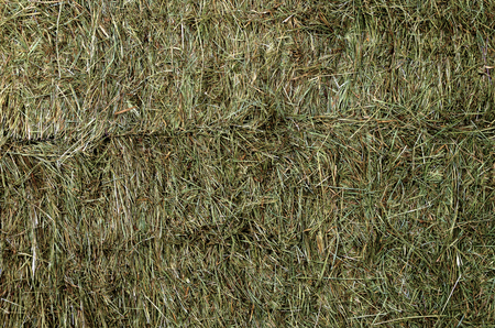 bails: wall made from piled up pressed hay bales Stock Photo